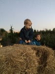 B enjoyed climbing the hay bales