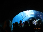 Watching the mermaids in this tunnel was B's favorite part