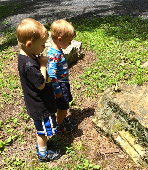 The boys had fun watching this butterfly and asking questions about the woods