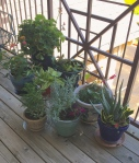 My deck plants before the squirrel discovered them.