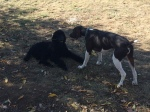 The puppies played too :) 3 hours of running