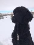 Griffin's 1st snow